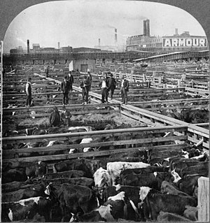 The Jungle - Men walking on wooden rails between cattle pens in the Chicago stockyard (1909)