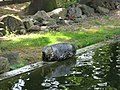 Chomutov lesopark - panoramio.jpg