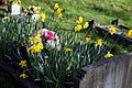 Church of St Mary Theydon Bois Essex England - churchyard grave flowers.jpg