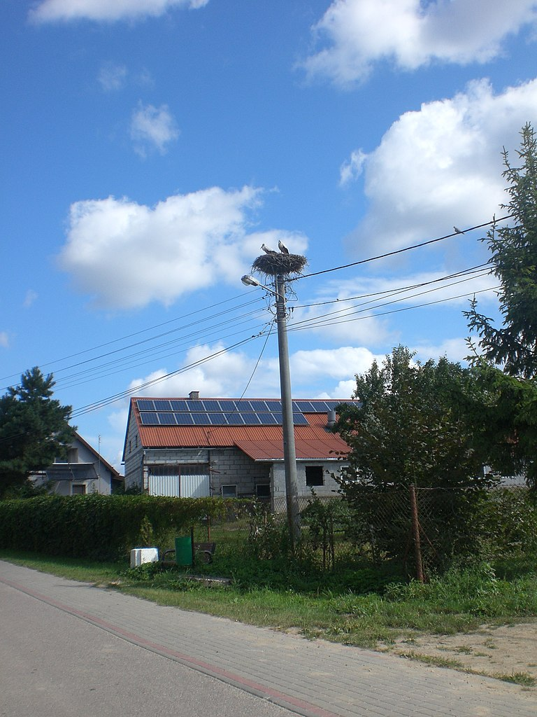 768px-Ciconia_ciconia_nest_in_Czarnocin.jpg