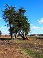 Cleared Land - geograph.org.uk - 733379.jpg