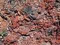 Clinker outcrop (Wasatch Formation, Lower Eocene; coal fire metamorphism at 19 ka, Late Pleistocene; Interstate 90 west-bound hilltop rest area, east of Buffalo, Powder River Basin, Wyoming, USA) 3 (20130300955).jpg