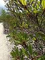 Close up of plant - panoramio.jpg