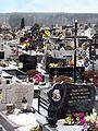 Cmentarz parafialny w Staszowie 2012 02.jpg