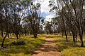 Coalseam Conservation Park.jpg