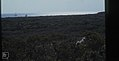 Coastal scrub. Little San Salvador. (Duplicate) (27093652899).jpg