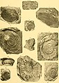 Contribution à la carte géologique de l'Indo-Chine. Paléontologie (1908) (20497554130).jpg
