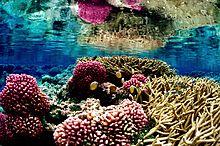 The Coral Island Pdf
