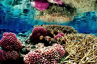 Coral island - Healthy reef system