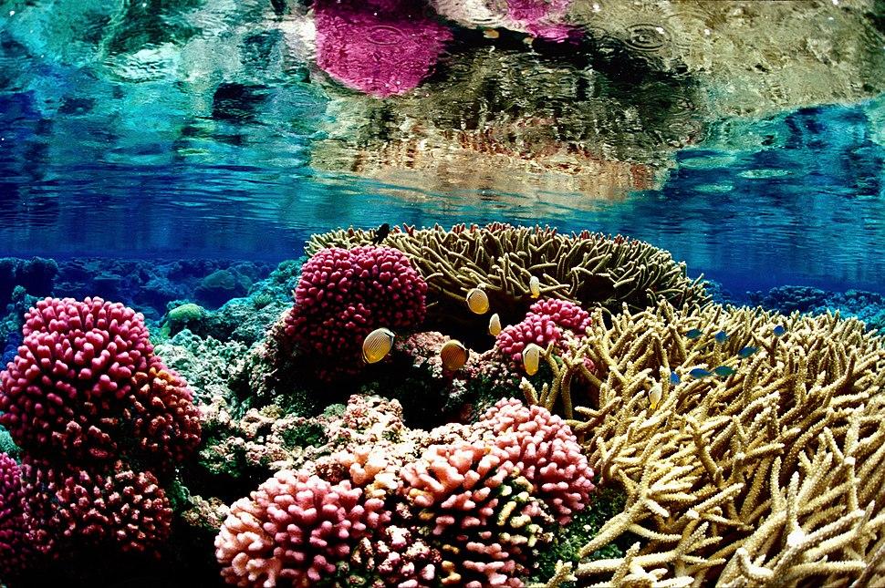 Coral reef at palmyra