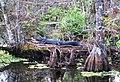 Corkscrew - alligator.jpg