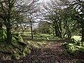 Cornwood Footpath 26 - geograph.org.uk - 311932.jpg