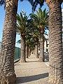 Corse-04530-alignée de palmiers bastia.jpg