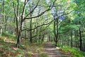 Cromwell Wood (2934755509).jpg