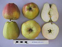 Cross section of Criterion, National Fruit Collection (acc. 1976-077).jpg