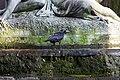 Crow on a fountain (38297687084).jpg