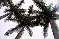 Cuba 2013-01-28 (8559295608).jpg