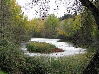 Manzanares (river) river in Spain