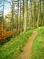 Cycle Trail in Newcastleton Forest - geograph.org.uk - 611606.jpg