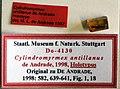 Cylindromyrmex antillanus SMNSDO4130 specimen tags and amber.jpg
