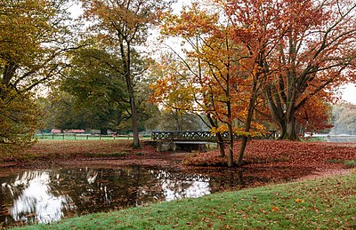 Autumnal scene with yellow, orange and red leaves on trees and fallen on the ground Dulmen, Wildpark -- 2014 -- 3808 color balanced.jpg