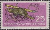 DDR 1959 Michel 691 Biber.JPG