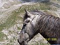 DRAKOLIMNI WILD HORSE.jpg