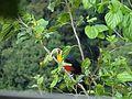 Da minha varanda posso ouvir os pássaros 13.jpg