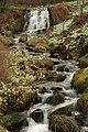 Dawyck Botanic Garden (3758019351).jpg