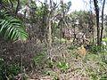 Degradação Florestal Amazônia 32.jpg