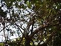 Dendrobium sp. (16670484493).jpg