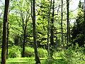 Dendropark (spring) 01.JPG