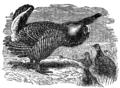 Descent of Man - Burt 1874 - Fig 39.png
