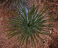 Desert Life (5205409234).jpg