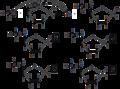Desoxyribonucleotides.png