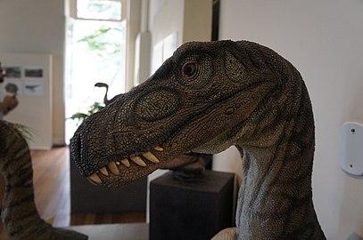 Detalhe de cabeça de reconstrução de dinossauro.jpg