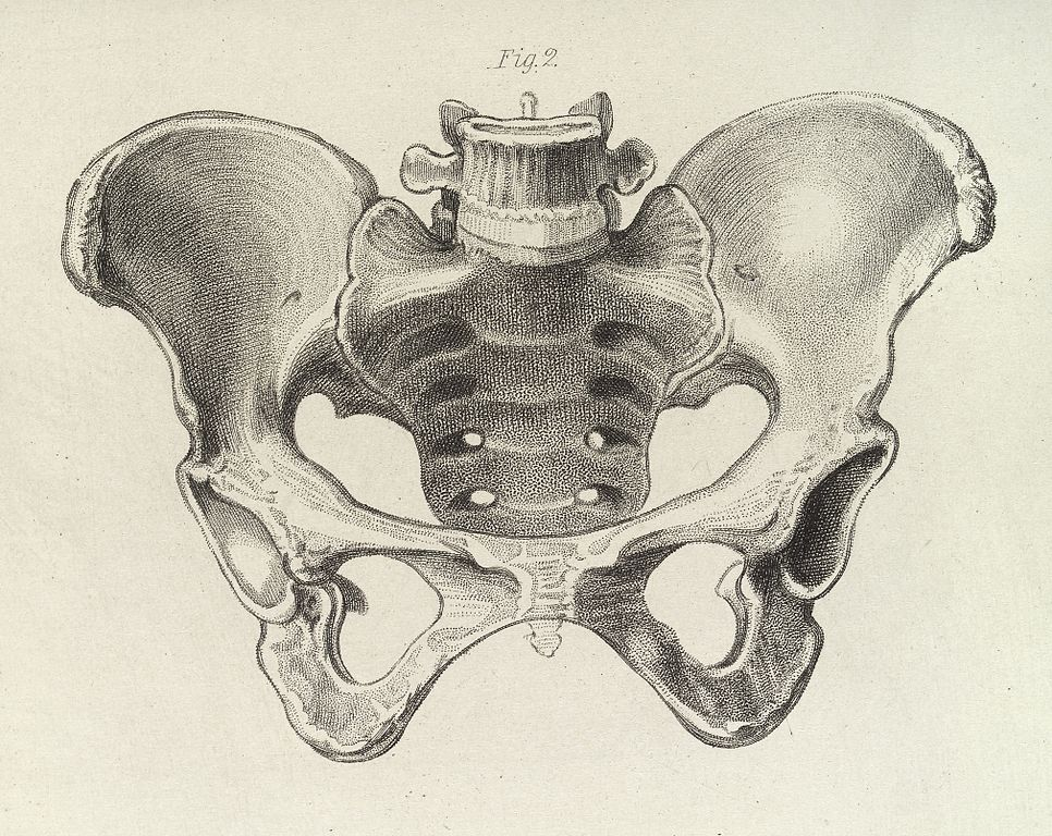 Filediagram Of The Female Pelvis Wellcome L0038287g Wikimedia