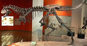 Pontifical Catholic University of Minas Gerais - Dinosaur Skeleton in PUC MG Museum of Natural Sciences