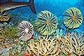 Diorama of a Devonian seafloor - crinoids, blastoids, algae, corals, fish (44933265294).jpg