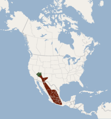 Distribution of Idionycteris phyllotis.png