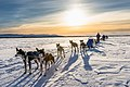 Dogsled resting in the middle of nowhere, Alaska (40522503104).jpg