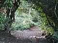 Donibristle Wood - geograph.org.uk - 100470.jpg