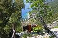 Donkey of Mt Athos.jpg