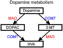 Diagram of primary pathways of dopamine metabolism. The metabolism of dopamine into DOPAC (3,4-dihydroxyphenylacetic acid) and 3-MT (3-methoxytyramine) is followed by metabolism of these intermediate products into HVA (homovanillic acid) by the action of MAO (monoamine oxidase) and COMT (catechol-O-methyltransferase).
