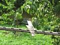 Dragonfly - panoramio - Dmitrijs Purgalvis.jpg