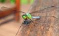 Dragonfly ran-126.jpg