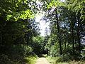 Dresdner Heide-Kannenhenkelweg 2016-022.4.jpg
