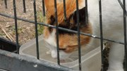 File:Drinking cat (Madrid, Spain) 01.webm