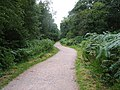 Drybrook Trail, Forest of Dean - geograph.org.uk - 35996.jpg