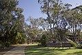 Dubbo NSW 2830, Australia - panoramio (177).jpg